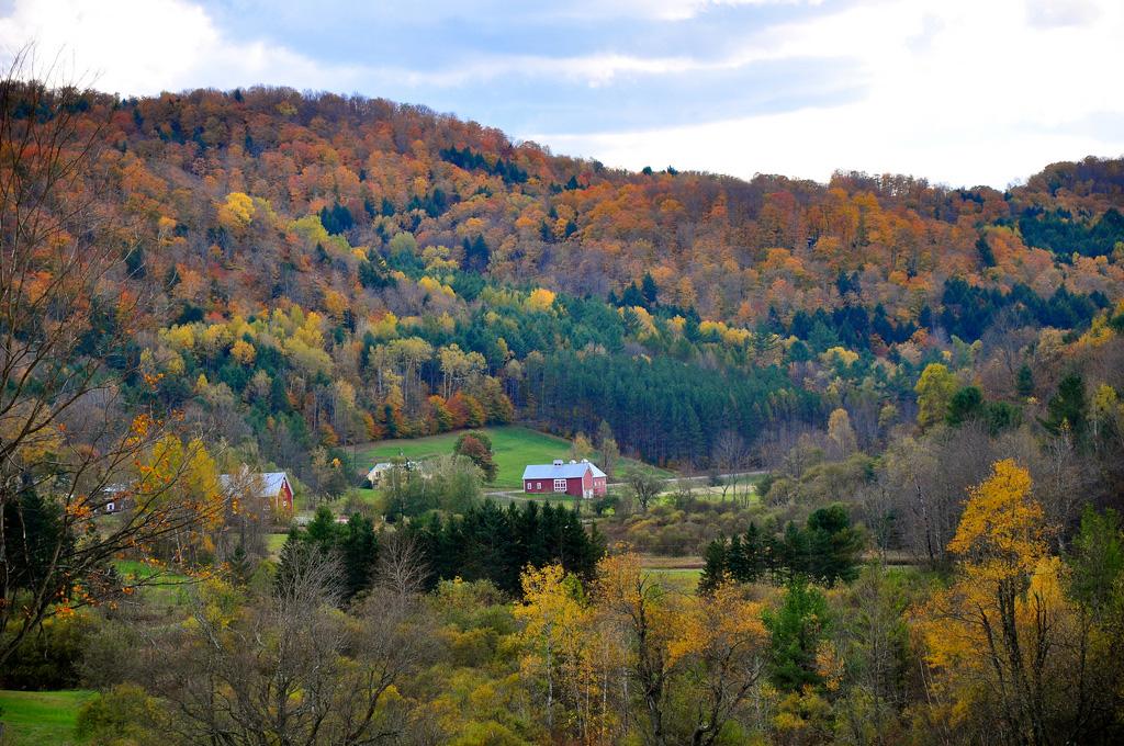鮮やかな秋色写真を撮る秘訣