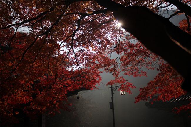 赤い葉っぱが印象的な秋の風景写真