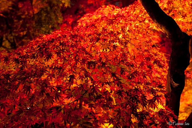 真っ赤な落ち葉が印象的