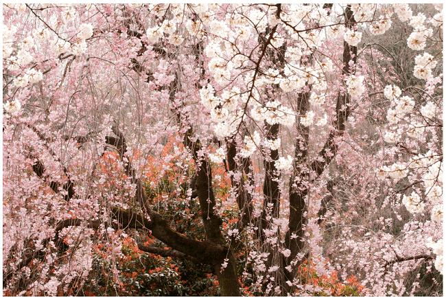写真家・尾崎裕士さんのポートフォリオサイトより「i-NATURE」