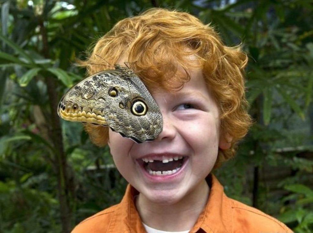 蝶々と男の子