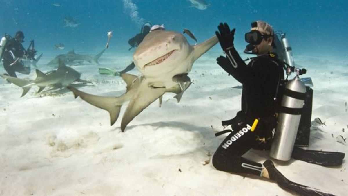 サメとハイタッチ