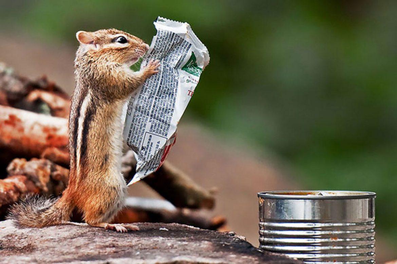 リスと新聞