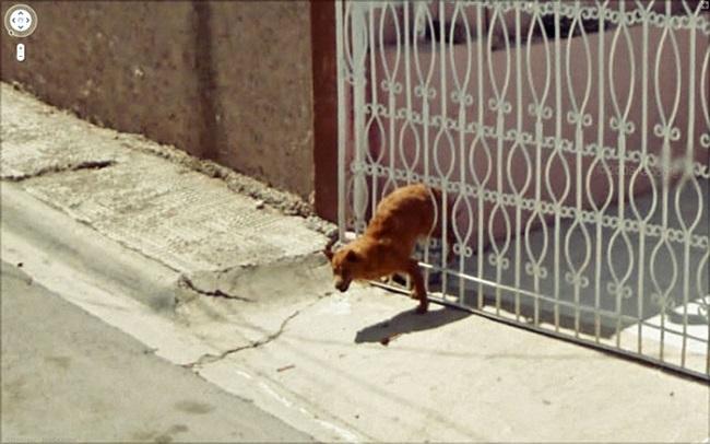犬が逃げ出す