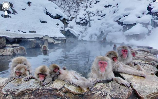 サルの露天風呂