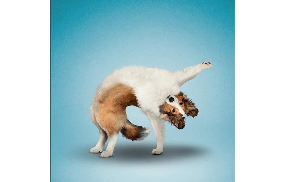 Yoga-Dogs