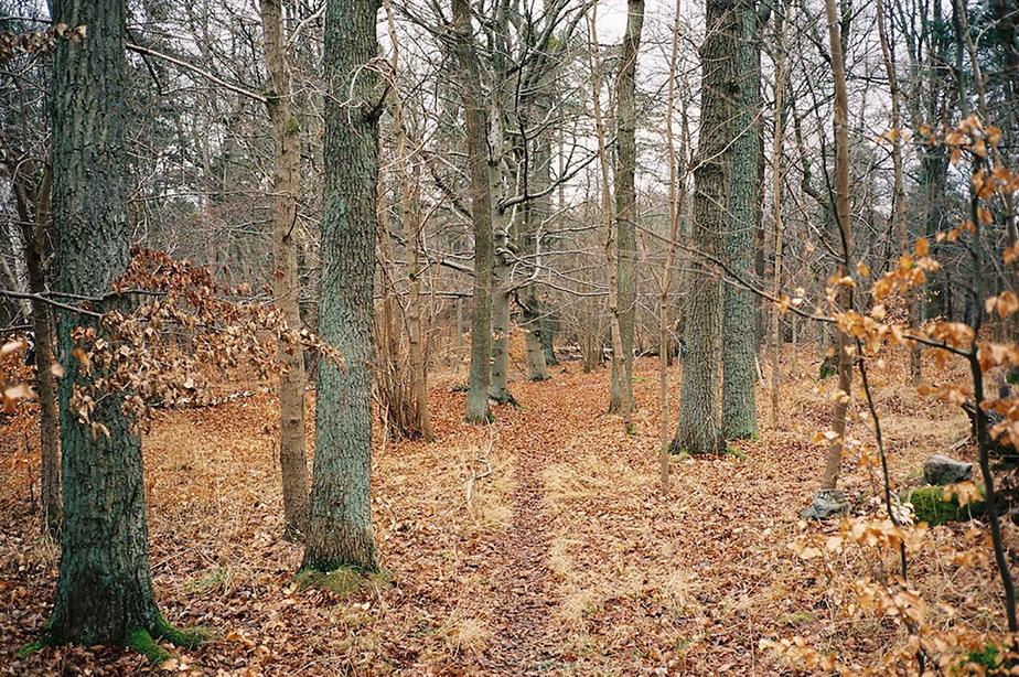 Wolgang-Schönak