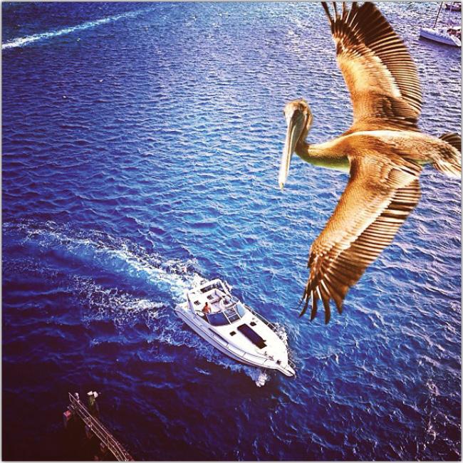 今週Wixスタッフが見つけた鳥が海の上を飛ぶInstagram写真