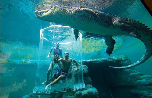 オーストラリアの絶景プール