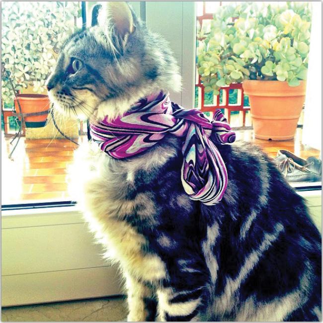 スカーフをしている猫のInstagram画像