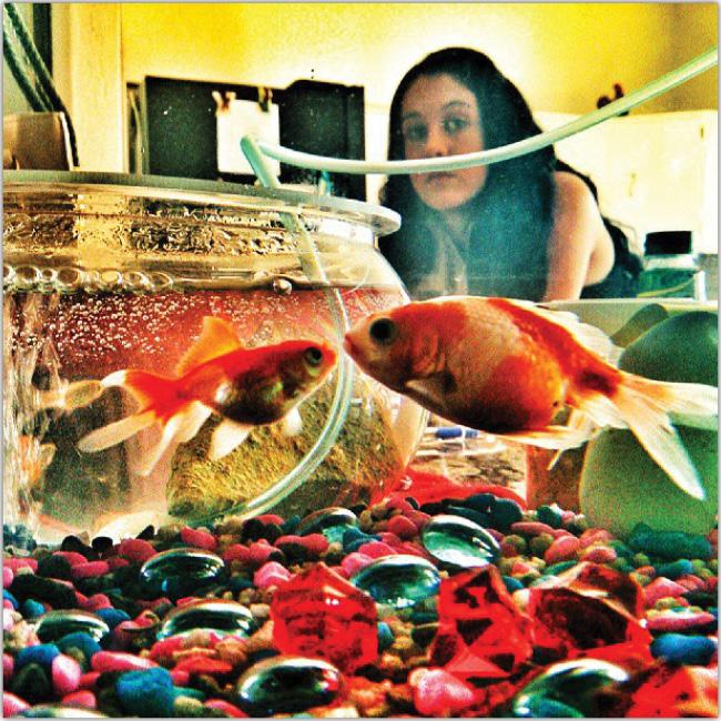 金魚のInstagram画像
