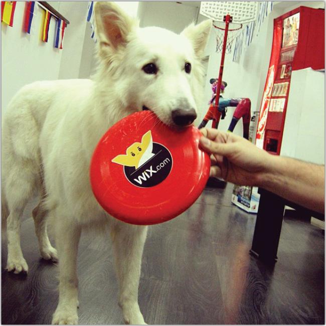 Wixオフィス犬のInstagram画像
