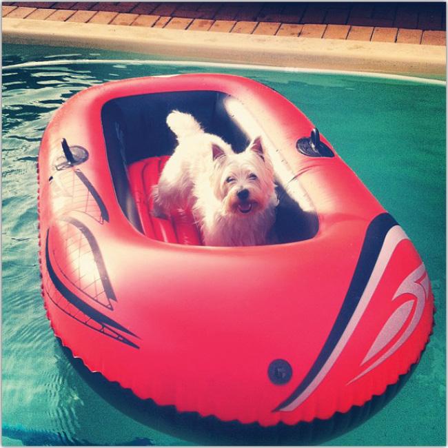 プールでボートに乗る犬のInstagramフォト