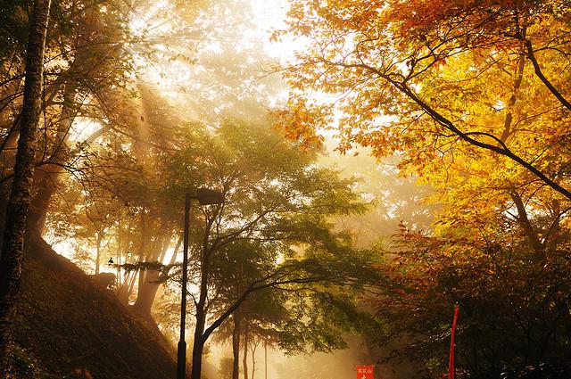セピア色の日差しが秋を感じる写真